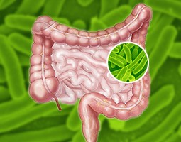 Probiotyki i Enzymy Trawienne