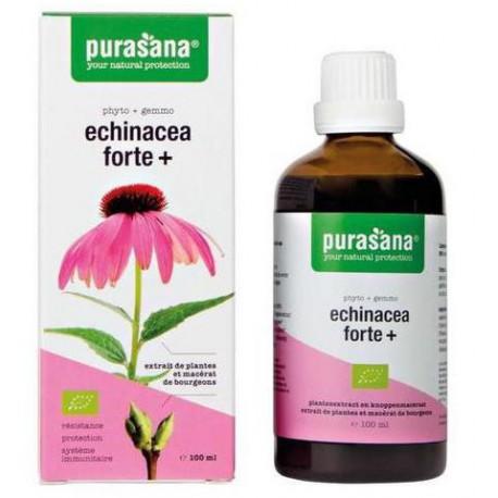 ECHINACEA FORTE (JEŻÓWKA PURPUROWA) KROPLE BIO 100 ml - PURASANA